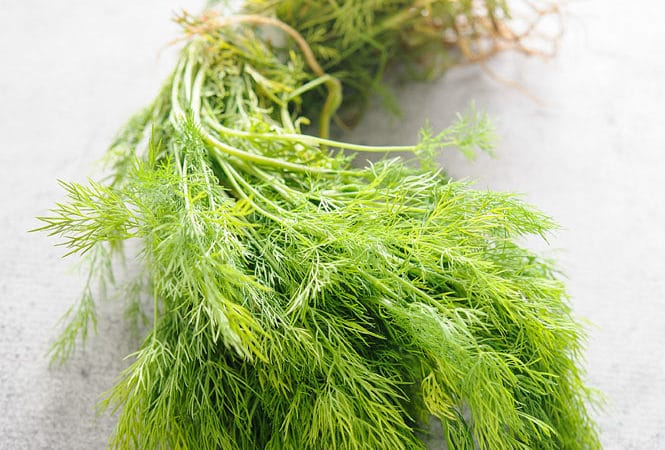 photo of a bunch of dill